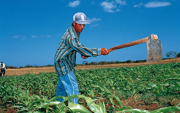 Farmer working in a maize field in Nicaragua