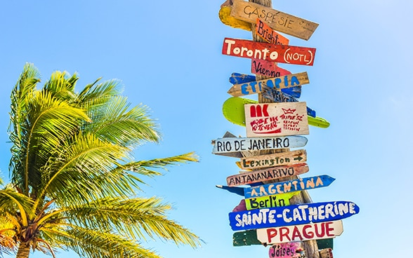 Numerous signposts are attached to a post one above the other. They point in different directions and bear the names of countries and cities. A palm tree is in the background.