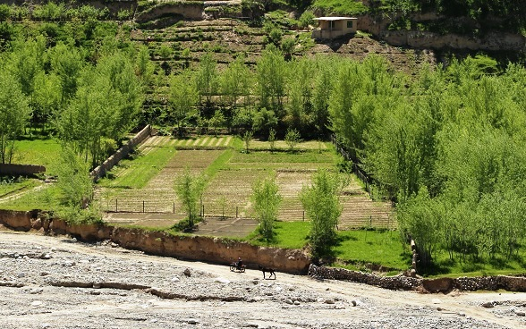 Bird's eye view of Sarajuddin's fruit nursery